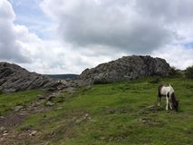 Дикие лошади/пони парка штата Вирджинии гористых местностей Grayson Стоковое Изображение RF
