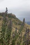 Дикие растения в горах Стоковые Изображения RF
