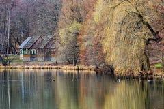 Дикие утки на озере весной Стоковое Изображение