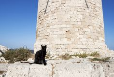 Дикий греческий черный кот Стоковое Изображение RF