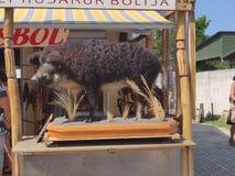 Дикий кабан культуры Венгрии стоковая фотография rf