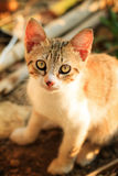 Дикий котенок Стоковое Изображение RF