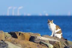 Дикий кот на береге моря Стоковая Фотография
