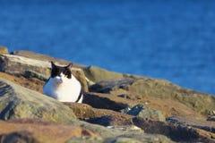 Дикий кот на береге моря Стоковое Изображение RF