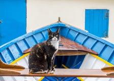 Дикий кот на шлюпке fishermans, Мальте Стоковое Изображение
