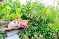 Дикий кот отдыхая на черепицах Стоковые Фотографии RF