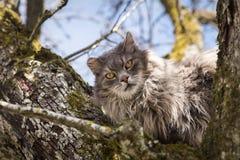 Дикий кот сидя на дереве, ждать отделение пожарной охраны, re Стоковая Фотография RF