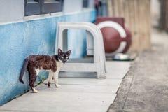 Дикий кот смотря сердитый Стоковые Фото