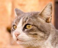 Дикий кот Стоковая Фотография