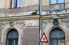 Дилемма для кота - выбор, который нужно пойти вверх или вниз стоковая фотография rf