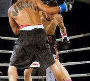 Дилетант и профессиональный бокс стоковая фотография