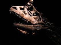 Динозавр/тиранозавр Стоковое Изображение