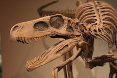 динозавр Стоковое Изображение