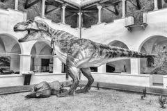 Динозавр, aka t-rex Rex тиранозавра, на выставке в Gubbio, Стоковая Фотография