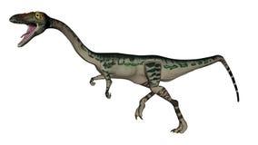 Динозавр Coelophysis - 3D представляют Стоковые Фото