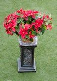 Дисплей рождества Poinsettias Стоковое Изображение RF