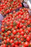 Дисплей рынка томатов лозы Стоковая Фотография RF