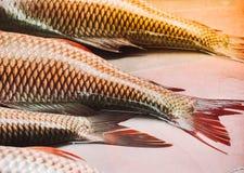 Дисплей свежих рыб в рынке Стоковое Изображение RF