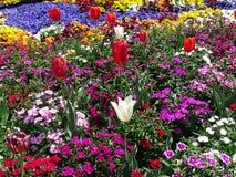 Дисплей тюльпанов и разнообразие цветков в саде стоковая фотография