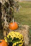 дисплей halloween Стоковые Фото