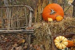 Дисплей благодарения тыквы и тыкв Стоковые Фото