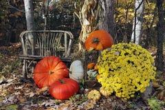 Дисплей благодарения тыкв и тыкв Стоковая Фотография RF