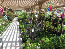 Дисплей цветка и завода, ботанические садовые центры, Claremont, Калифорния, США стоковые фотографии rf