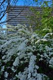 Дистантные белые блоки зданий и цветки мака претендующие на тонкий вкус Стоковое фото RF