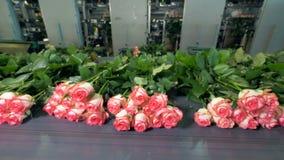 Дистанцируя взгляд на много роз лежа на транспортере перед паковать сток-видео