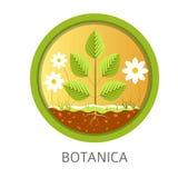 Дисциплина школы Botanica, информационные уроки о природе и флора иллюстрация штока