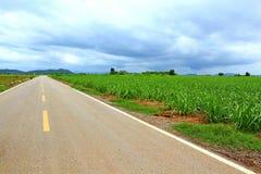 Длинная прямая пустая дорога асфальта или сельская дорога Стоковые Изображения RF