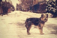 Длинная собака волос под падая снегом стоя на улице зимы пустой, винтажным стилем стоковое изображение