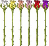 Длинние розы стержня Стоковые Фото