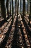 длинние тени Стоковые Фотографии RF