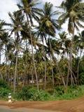 Длинное дерево Индия стоковая фотография rf