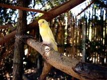 Длиннохвостые попугаи садить на насест на ветви дерева Стоковые Фотографии RF