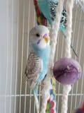 Длиннохвостый попугай мальчика стоковые изображения