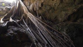 Длинные корни деревьев спускают в пещеру к воде сползать съемку Мексика, Юкатан, известное большое Cenote 4K сток-видео