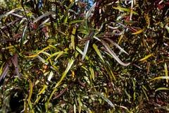 Длинные листья других цветов Справочная информация Стоковое Фото