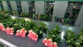 Длинные стержни свеже отрезанных роз на транспортере выравниваются видеоматериал