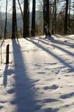 Длинные тени деревьев на снеге в лесе зимы стоковая фотография