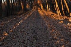 Длинные тени на густолиственной дороге стоковое изображение