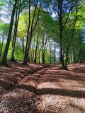 Длинный приятный путь для расслабляющей прогулки в лесе Стоковое Фото