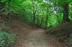 Длинный приятный путь для расслабляющей прогулки в лесе стоковые изображения