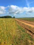 Длинный путь в поле стоковое изображение rf
