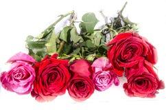 6 длинных больших белизн 4 красных и слишком 2 роз розовых с некоторым зеленым цветом Стоковое фото RF