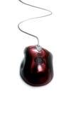 длинняя замкнутая мышь Стоковые Фото