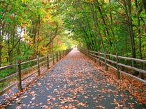 длинняя тропка лесистая Стоковая Фотография