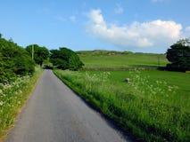 Длиной прямо пустая проселочная дорога при цветки и деревья весны растя вдоль краев при овцы пася в огороженных полях стоковое изображение