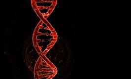Дна Изолят спирали винтовой линии молекулы ДНК wireframe конспекта 3d полигональный на черной предпосылке Скопируйте выйденный ко бесплатная иллюстрация